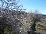 Mehr Mandelblüten