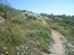 Üppiger Blumenflor am Weg