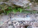 Höhle mit Farn