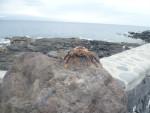 Meerestier mit La Gomera im Hintergrund