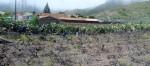 Beschneiden der Weinstöcke