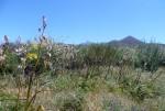 Immer in Sichtweite: Teide