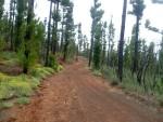 Auf dem Forstweg