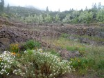 Am Rand des Forstweges