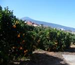 Orangenhain